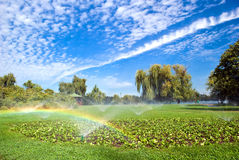 Watering the park. During a sunny summer day Royalty Free Stock Photos