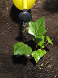 Watering plant Stock Images
