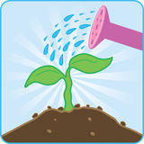 Watering plant. Watering pink watering can rising plant Royalty Free Stock Photography