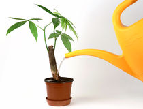 Watering a plant Stock Photo