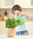 Watering the Plant Stock Images