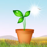 Watering the plant Royalty Free Stock Photography