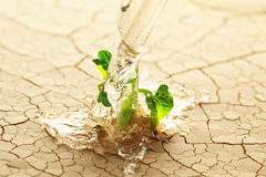 Watering a plant Stock Image