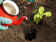 Watering and planting Stock Photos