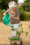 Watering The plants. Senior lady gardening watering her potted plants Royalty Free Stock Photo