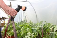 Watering plants. Stock Photography
