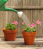Watering Plants Stock Image