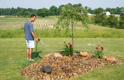 Watering the plants. A man watering his flower bed on a sunny hot day stock photos