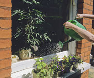Watering plants Stock Photography