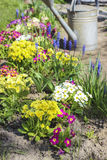 Watering plants in beautiful spring garden Stock Photo