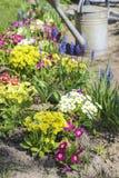 Watering plants in beautiful spring garden stock photo