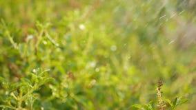 Watering plants in the garden.  stock video