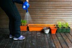 Watering plants. Gardner watering plants and seeds in flowerpots Royalty Free Stock Photo