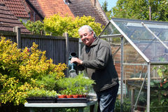 Watering plants. A happy smiling elderly gardener watering his plants in trays with a watering can stock photos
