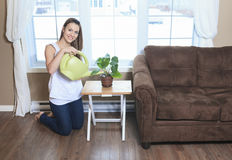 Watering The Plants in the living room Stock Image