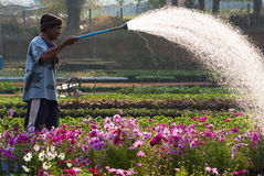 Watering plants Royalty Free Stock Photos