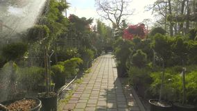 Watering Plants For Sale. In the Garden Store. Industrial Footage stock footage