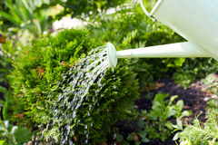 Watering plants with a watering can Royalty Free Stock Photography