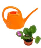 Watering-pot. Orange watering-pot  and flower in pot on white background.isolated Royalty Free Stock Photo