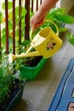 Watering pot Stock Photo