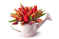 Watering pot with spring flowers Stock Image