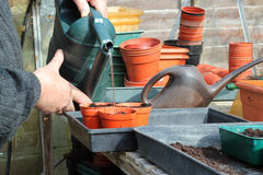 Watering pots in greenhouse closeup. stock images