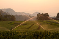 Watering Rice Field. In the evening Stock Photography