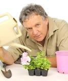 Watering Seedlings Stock Photos