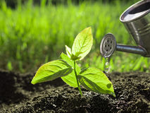 Watering seedlings growth nature concept Stock Photography
