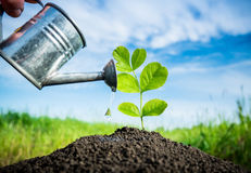watering seedlings nature concept Royalty Free Stock Photography