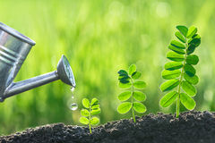 Watering seedlings nature concept Stock Photos