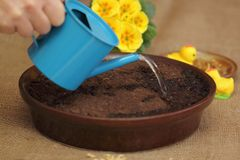 Watering seeds for Ester  decoration Royalty Free Stock Image