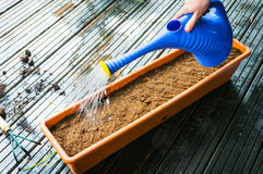 Watering seeds Royalty Free Stock Photos