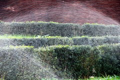 Watering the shrubs. Sprinklers watering shrubs in the park Royalty Free Stock Photos