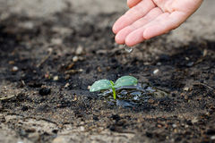 Watering the soil of sapling in garden. Stock Image