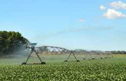 Watering Soy Beans Stock Images