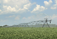 Watering Soybeans Stock Photos