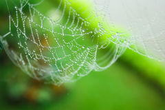 Watering spider web in a garden Royalty Free Stock Image