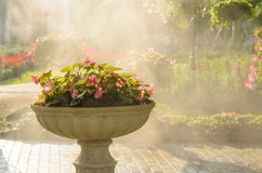 Watering spraying flower in a flower pot Stock Image