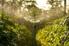 Watering from springer Stock Photography