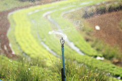 Watering Sprinkler  Stock Photos
