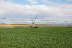 Watering with Sprinkler Irrigation System Royalty Free Stock Photography