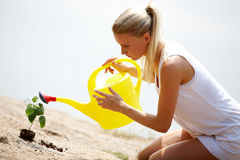 Watering sprout Stock Photography