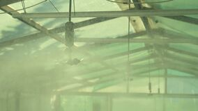 Watering system inside the greenhouse. Irrigation process in hothouse.