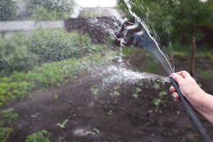 Watering to plant with a hose. grandmother hand watering the garden. Watering to plant with a hose. grandmother hand watering the garden royalty free stock images
