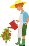 Watering tomatoes. Young redheaded gardener watering a tomato plant with ripe tomatoes, vector cartoon, isolated on white Stock Photos