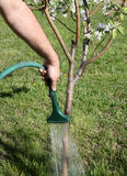 Watering Tree Royalty Free Stock Images