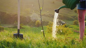 Watering a tree from a watering pad. Picturesque background, beautiful lighting before sunset. Nearby there is a shovel stock video footage