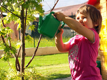 Watering the trees Stock Image
