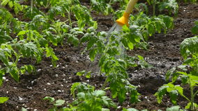 Watering of vegetable garden stock video footage
